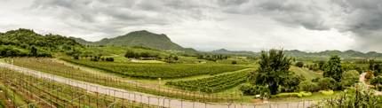 A cloudy morning over Hua Hin Hills vineyard