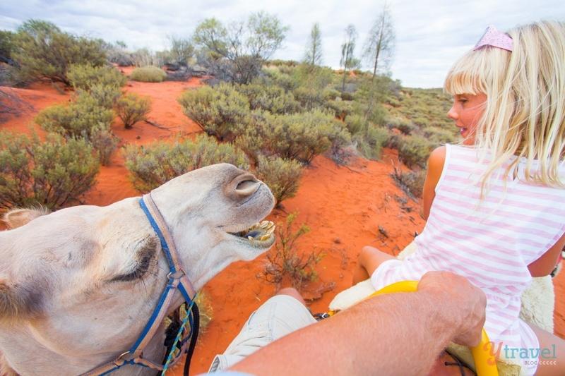 Uluru sunset camel ride - Northern Territory, Australia