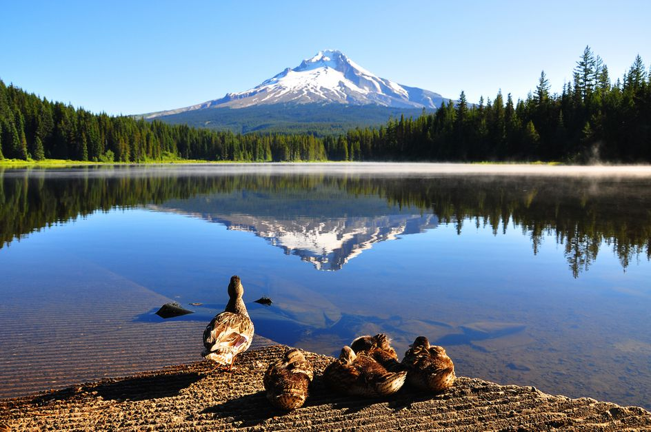 Drive on a Dime—5 Best Pacific Northwestern Road Trip Stops - 11