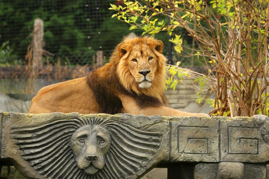 You Can Visit These 13 Zoos & Aquariums from Your Home - 2
