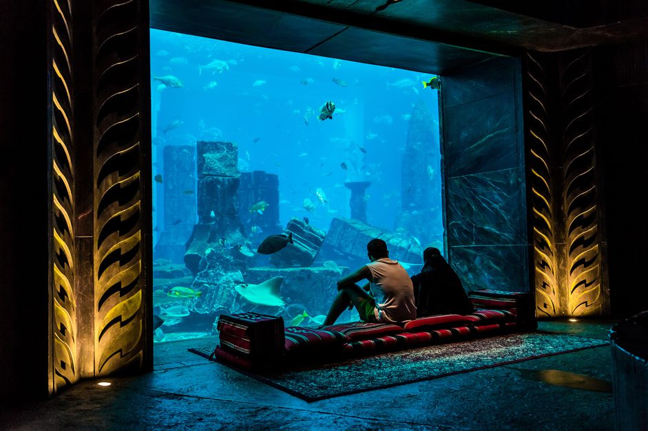 You Can Visit These 13 Zoos & Aquariums from Your Home - 4