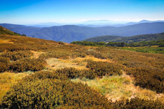 Grassy alpine plains in Victoria's north east and a horizon of bush covered mountains into the hazy horizon