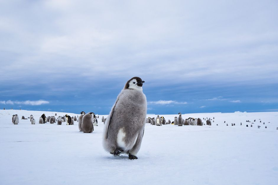 Glamping with Penguins at White Desert in Antarctica! - 12