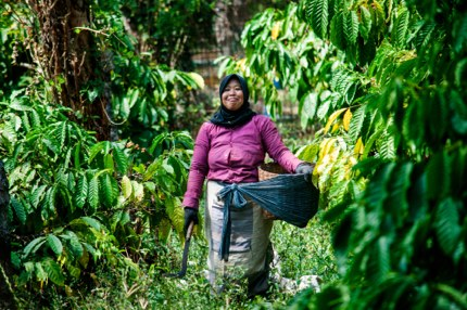 A coffee farmer in Java, Indonesia