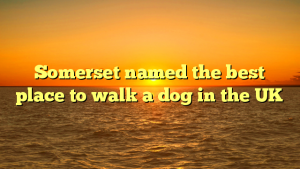 Somerset named the best place to walk a dog in the UK